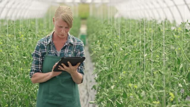 Weibliche Bauernhof-Mitarbeiter, die Kontrolle über die Tomaten mit einem digitalen tablet