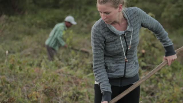 vídeos de stock, filmes e b-roll de voluntária de fazenda trabalhando em um campo - digging