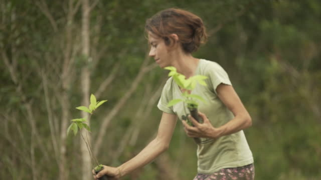 female farm worker planting a tree in brazil - south america stock videos & royalty-free footage