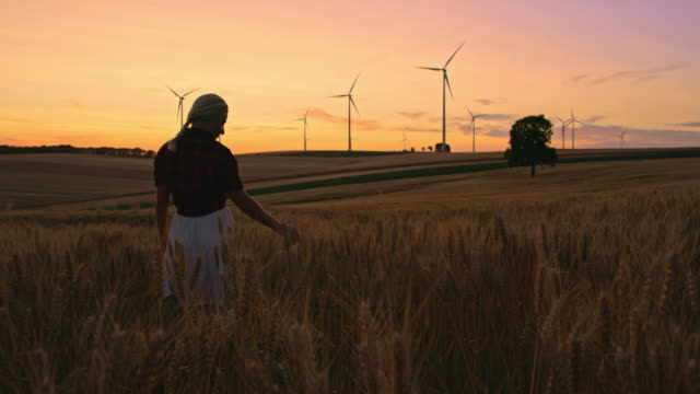 ds female farmer caressing wheat plants while walking in a field with wind turbines in the distance - mid distance stock videos & royalty-free footage