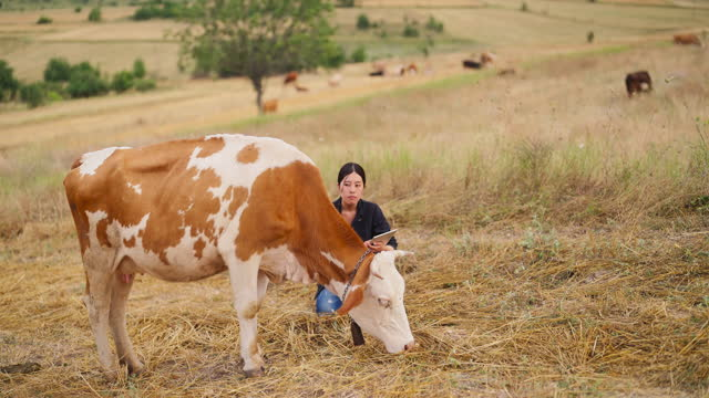 female farmer checking on cattle with digital tablet - cattle stock videos & royalty-free footage