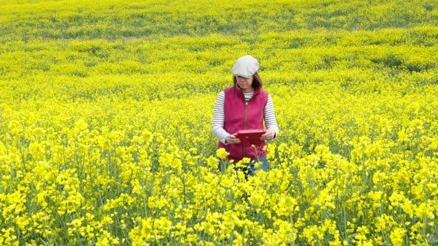 a female farmer checks on her oilseed rape crop - crucifers stock videos & royalty-free footage