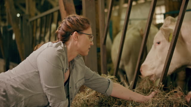 vidéos et rushes de agricultrice, nourrir ses vaches dans l'étable avec du foin à la main - medium group of animals