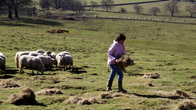 Agricultor alimentación hembra de la oveja