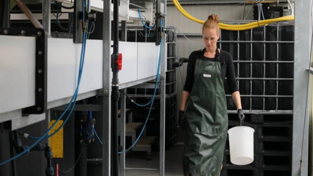 bäuerin trägt eimer in der fischzucht - examining stock-videos und b-roll-filmmaterial