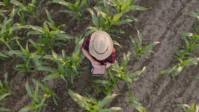 aerial female farmer using a tablet in a field - land stock videos & royalty-free footage