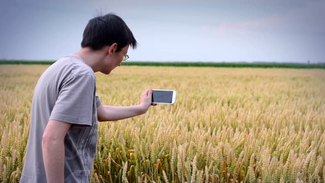 female farmer using smart phone in wheat field - control stock videos & royalty-free footage