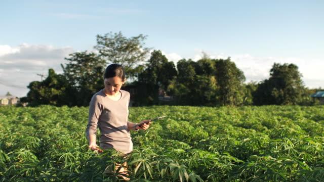 female farmer using tablet - market vendor stock videos & royalty-free footage