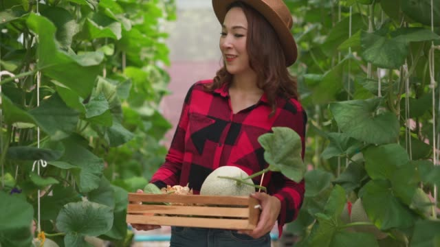 Female farmer walking in the field holding cantaloupe in crate