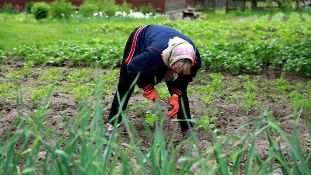 female farmer weeding the plants with a hoe - garden hoe stock videos & royalty-free footage