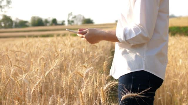 weiblicher landwirt mit digitalem tablet, das das wachstum von gerstenfeld, zeitlupe überprüft - getreide stock-videos und b-roll-filmmaterial