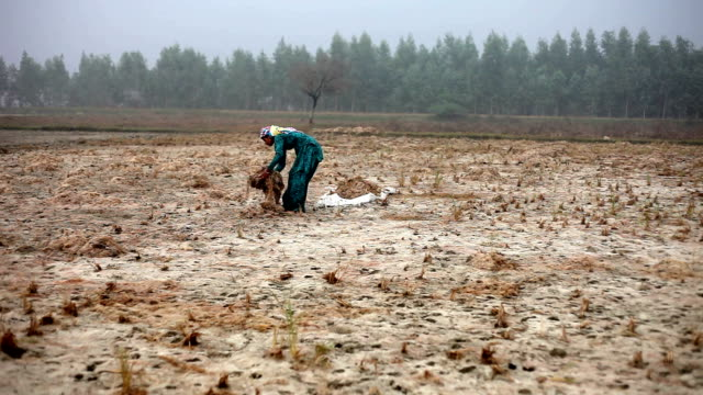 female farmer working in the field during winter season - accidents and disasters stock videos and b-roll footage