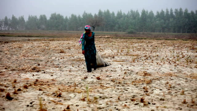 Female farmer working in the field during winter season
