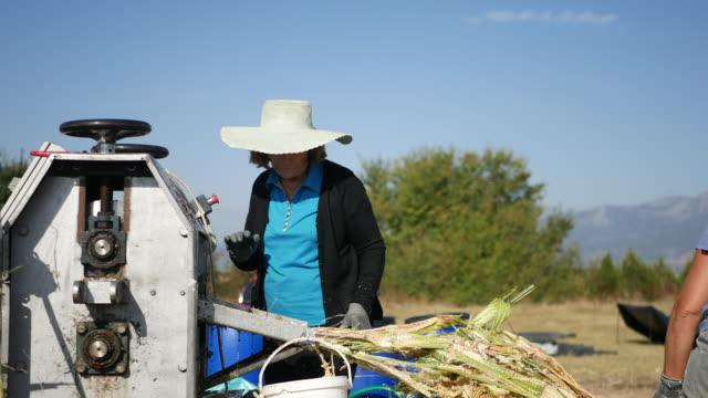 kvinnlig jordbrukare som arbetar i solen - ansvarsfullt företagande bildbanksvideor och videomaterial från bakom kulisserna