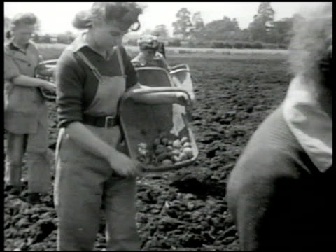 female farmers in line walking through field dropping seeds ms women w/ small tomatoes in baskets planting seeds ws woman driving tractor through... - rural scene stock videos & royalty-free footage