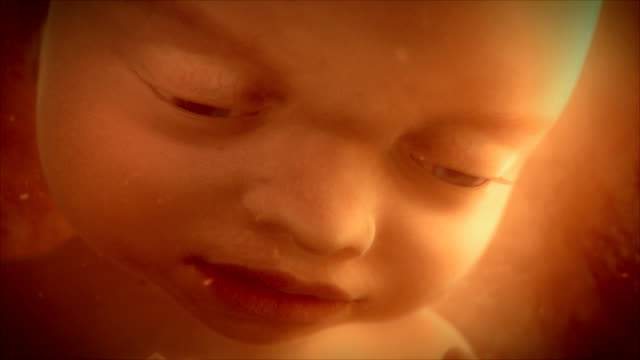 """female foetus in the womb, animation"" - 人間の子宮点の映像素材/bロール"