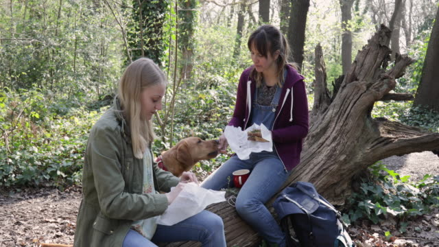 female friends having a picnic in forest, dog begging for food. - bib overalls stock videos and b-roll footage