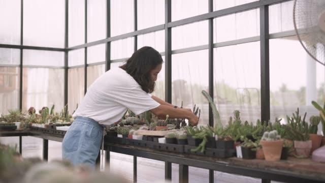 gärtner schneidet die saftige pflanze für die veredelung - kaktus stock-videos und b-roll-filmmaterial