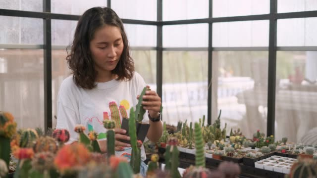 female gardener examining the cactus plant - houseplant stock videos and b-roll footage