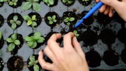 Female gardener planting propagation