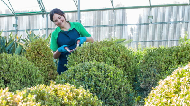 vídeos y material grabado en eventos de stock de mujer jardinero dando forma a las plantas en el centro del jardín - seto
