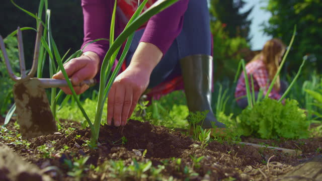 slo mo giardiniere femminile che disosta un letto da giardino in una giornata di sole - legame affettivo video stock e b–roll