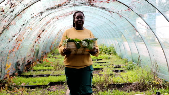 female gardener with a vegetable box in organic farm - crate stock videos & royalty-free footage