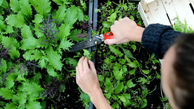 female gardener working on a community allotment - community garden stock videos & royalty-free footage