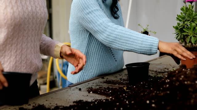 female gardeners planting new seedlings - pot plant stock videos & royalty-free footage