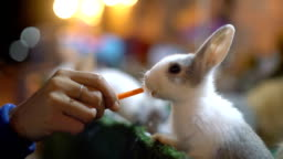 Female hand feeding rabbit with carrot close-up