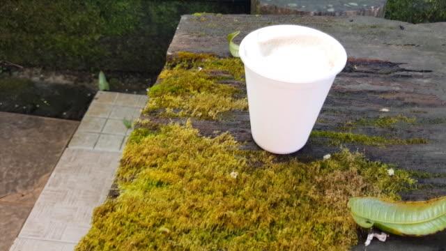 kvinnlig hand håller ett papper kaffekopp på ett trä bord med gröna lavar och mossa i djupa skogen