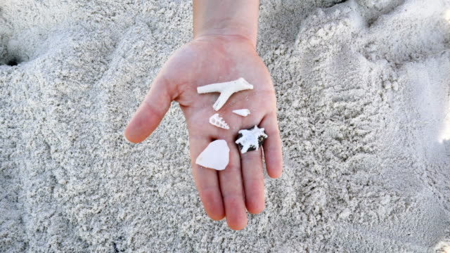 female hand holding seashells. beach holiday - seashell stock videos & royalty-free footage