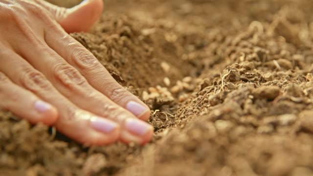vidéos et rushes de ld main femelle plaçant des graines dans la rangée dans le sol de jardin et les couvrant doucement - écosystème