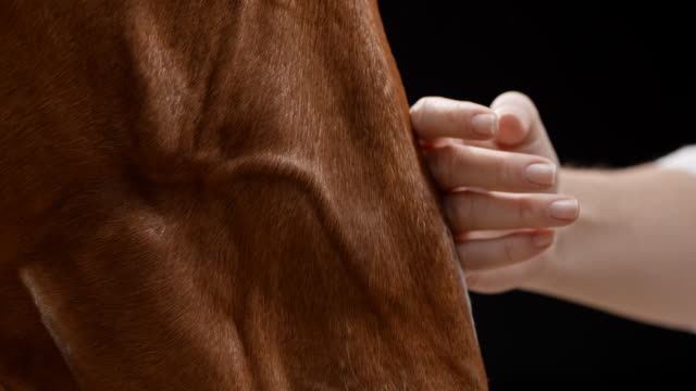 female hand stroking brown horse's muzzle - braun stock-videos und b-roll-filmmaterial