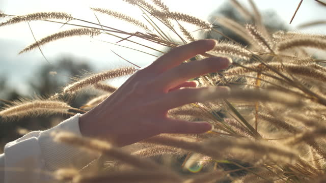 female hand touching and caressing grass plant - swaying stock videos & royalty-free footage