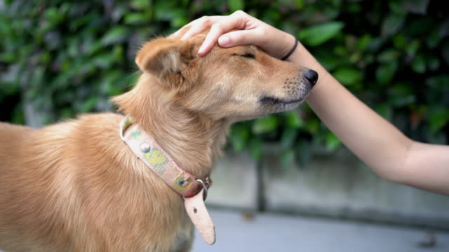 female hand touching and petting brown dog - stroking stock videos & royalty-free footage