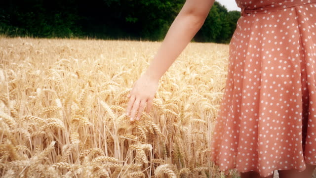 Female hand touching wheat walking through a field. SM
