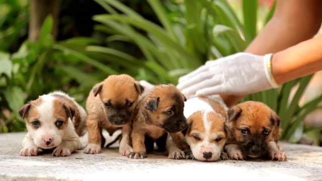 vídeos de stock e filmes b-roll de feminino mão lavar cachorrinho cão - porta sabonete líquido