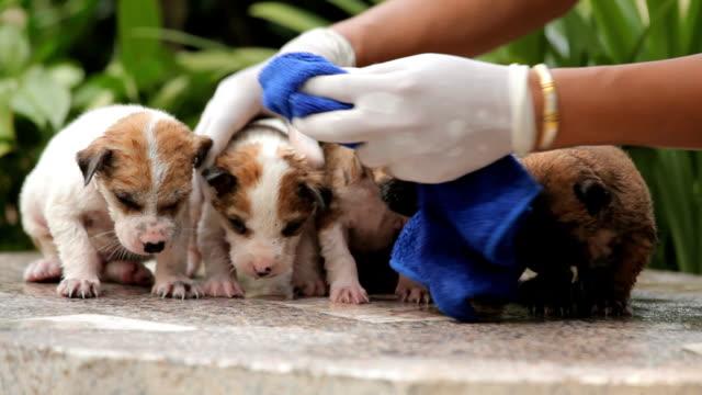 stockvideo's en b-roll-footage met female hand washing puppy dog - foam hand