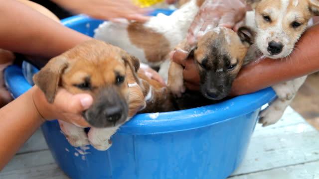 Female hand washing puppy dog