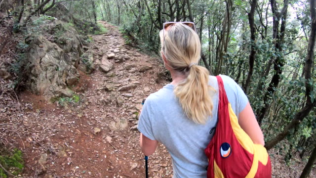 female hiker ascends trail through deciduous hardwood forest - hardwood stock videos & royalty-free footage