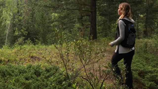 vídeos y material grabado en eventos de stock de hiker femenino explora el área del bosque, controles de teléfono para la dirección - sólo mujeres jóvenes