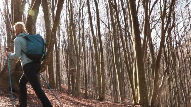 Female hiker follows trail through forest, in spirngtime