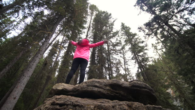 female hiker in pine forest - pine woodland stock videos & royalty-free footage