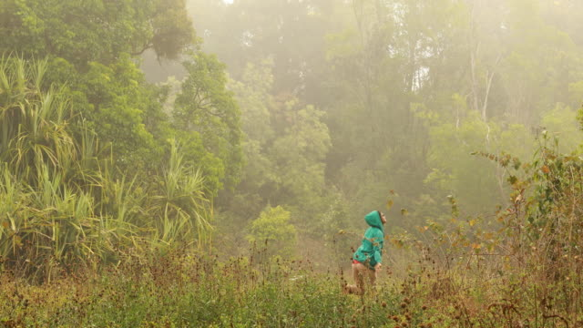 weibliche wanderer in den dichten wald - variable schärfentiefe stock-videos und b-roll-filmmaterial