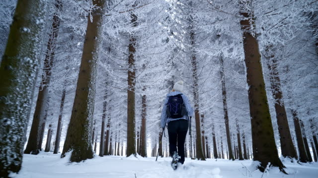 female hiker walking in winter forest - pine tree stock videos & royalty-free footage