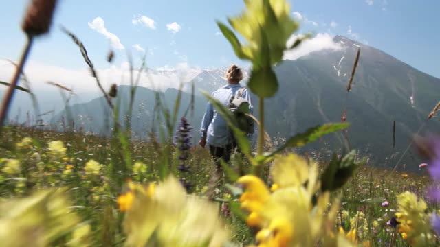female hiker walks through alpine flowers - plant attribute stock videos and b-roll footage