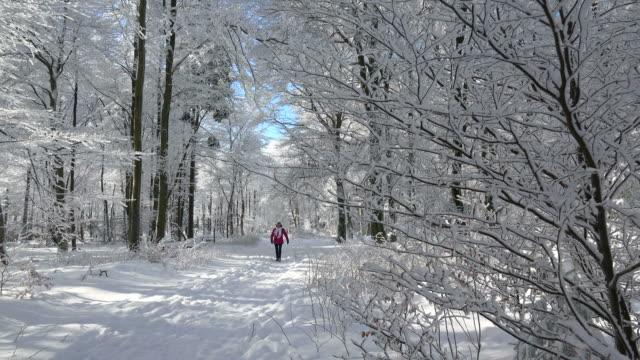 female hiker walks through winter forest - cappotto invernale video stock e b–roll