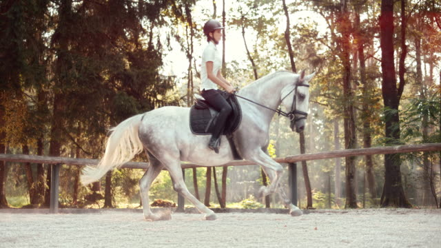 slo mo ld female horse rider riding a cantering horse - all horse riding stock videos and b-roll footage