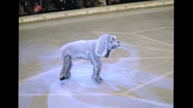 vidéos et rushes de / female ice skater dancing in the spotlight / penguin on stage with ice skater / skaters dressed up as a dog on the ice rink / clowns dive between... - dancing bear